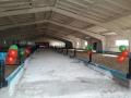 У буренок новый дом: В ОАО «Родина» ввели в эксплуатацию реконструированный сарай