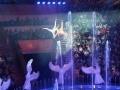Экскурсия в Гомельский цирк