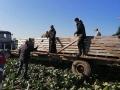 Профсоюзный актив помогает в уборке овощей 2021 года