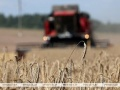 Около 800 школьников Гомельской области работали на зернотоках во время уборочной